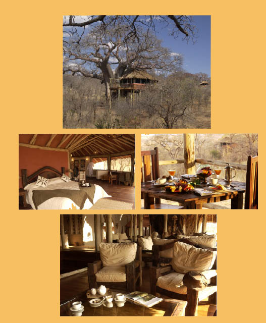 Pictures of the Tarangire Tree Tops