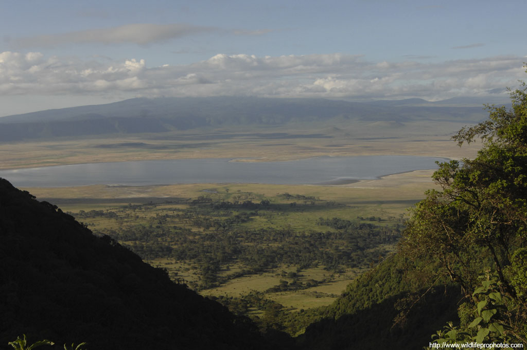 The Ngorongoro Crater is a UNESCO world heritage site, and contains the most wild animal density of any place in the world.